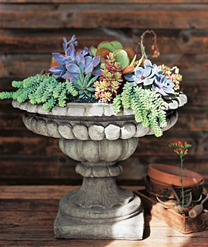 An old birdbath makes a perfect new home for shallow-rooted succulents.