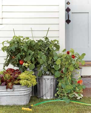 A potted salad garden