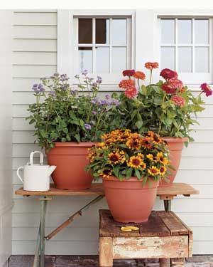 Terra-cotta pots are ideal for container plants because their porous walls let air and water move easily through, so roots grow healthily.