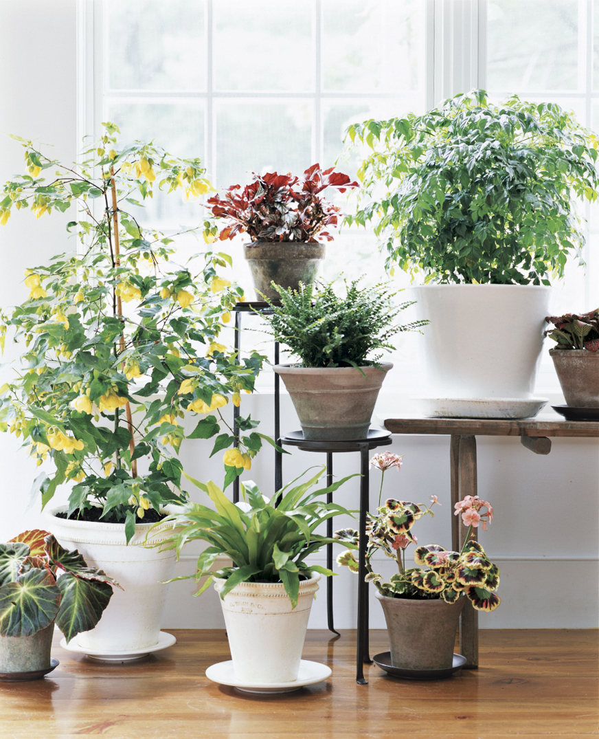 Always empty saucers after you water plants: Letting pots sit in water can damage roots.