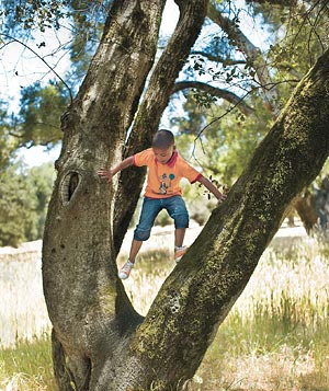Scout out a good climbing tree, with an angled trunk and strong, low branches.