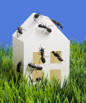 Ants climing on a house