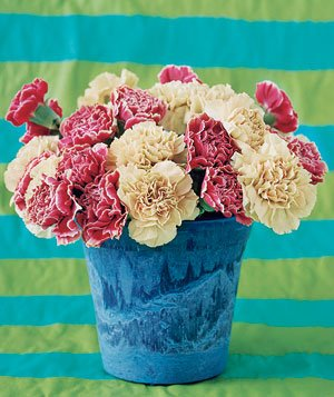 Pot of carnations