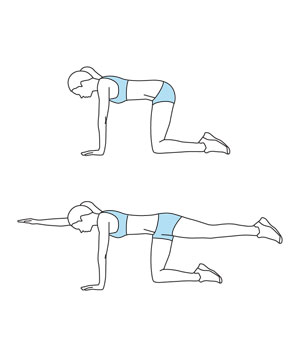 Image result for bird dogs workout