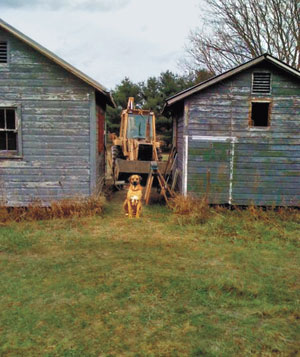 Dog sitting between two cottages