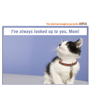 ASPCA kitten Mother's Day E-card