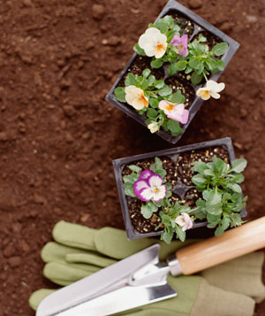 Flower boxes with gloves and shovel - mistake 1