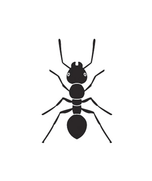 Illustration of fire ant