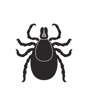 Illustration of tick