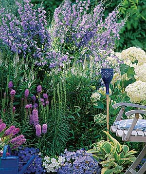 Campanula and Liatris