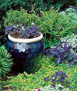 ceramic pot with purple shamrocks