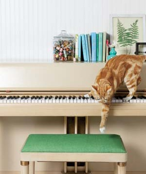 A pet cat steps off a piano onto a stool