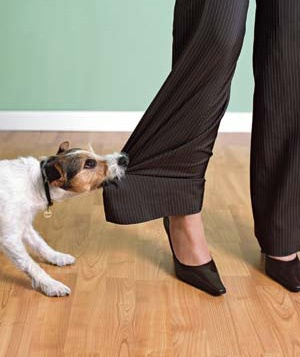 dog biting woman's pants