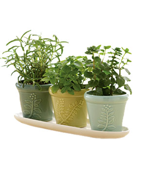 1-800-Flowers Herb Garden Trio