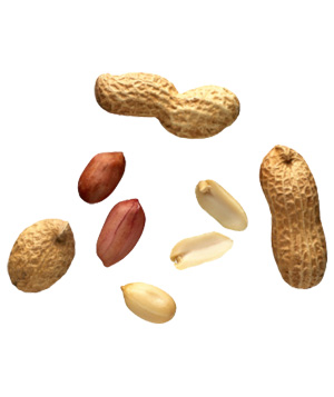 Common Types of Nuts