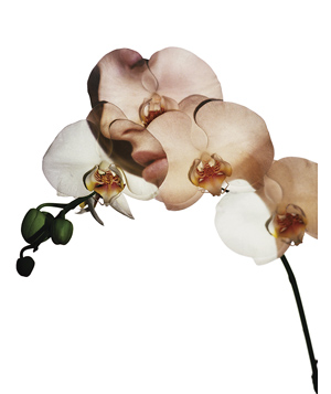Orchid Puzzle