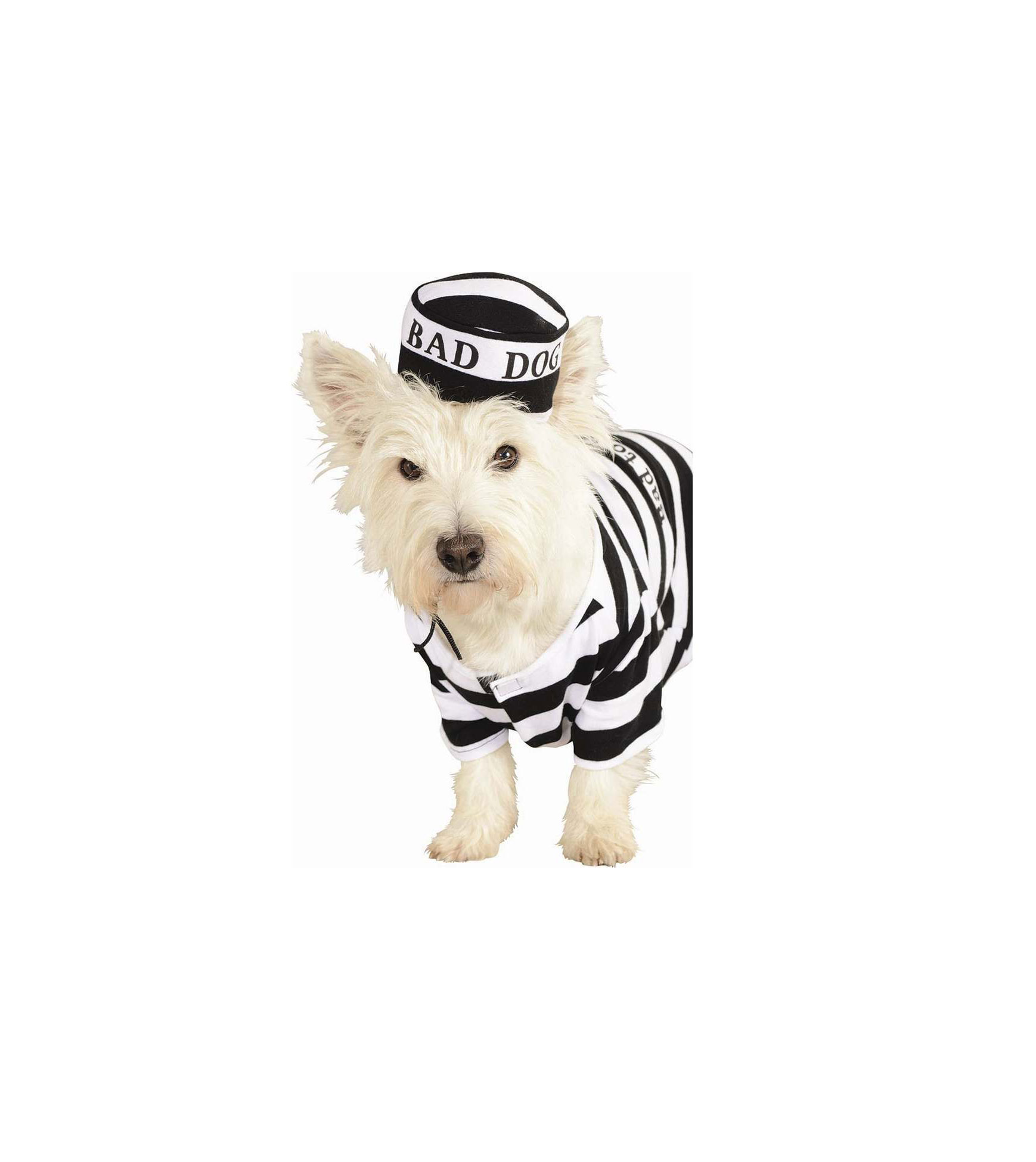 Prisoner Dog Costumer