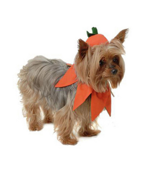 Pumpkin Costume  sc 1 st  Real Simple & 21 Silly Halloween Costumes for Pets | Real Simple