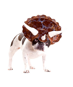Animal Planet Triceratops Costume  sc 1 st  Real Simple & 21 Silly Halloween Costumes for Pets | Real Simple