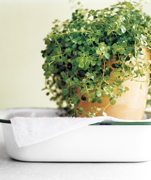 Towel as Plant Waterer