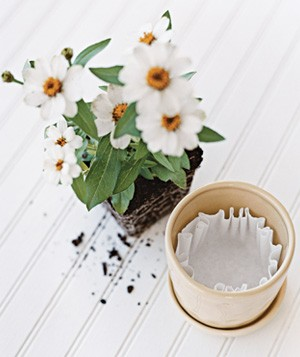 Coffee filter used in flower pot