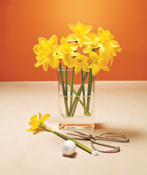 Flower stems stuffed with cotton