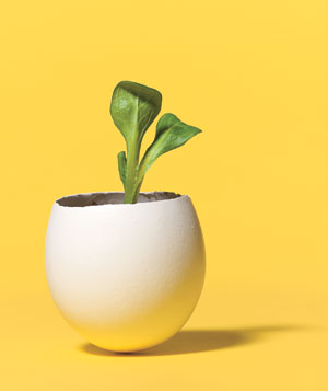Eggshell as Seedling Planter