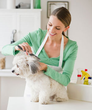 Groomer brushing dog