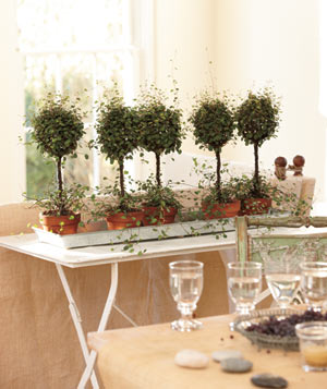 enjoy the grandeur of topiaries without the formality have a