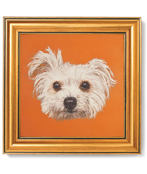 Dog head on orange background