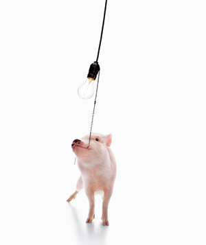 Pig with Lightbulb