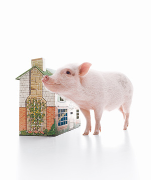 Pig with Doll House