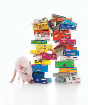 Pig with Cereal Boxes