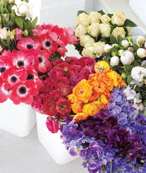 Color assortment of flowers