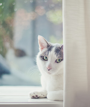 Cat laying on windowsill