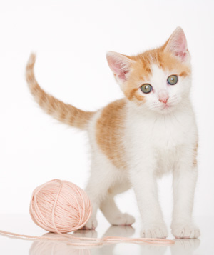 Small kitten next to pink ball of yarn