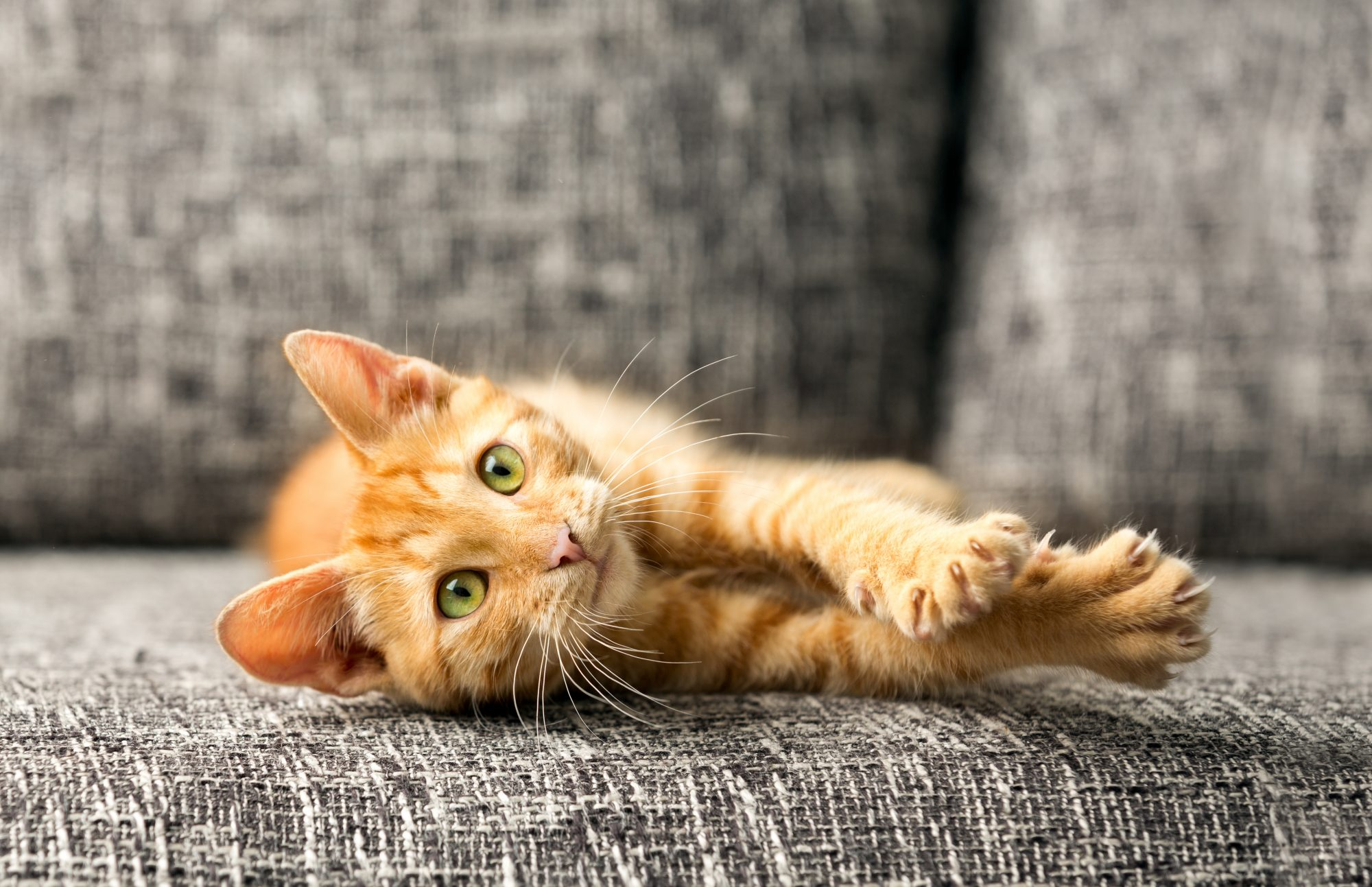 <p>Cat lying on a couch</p>