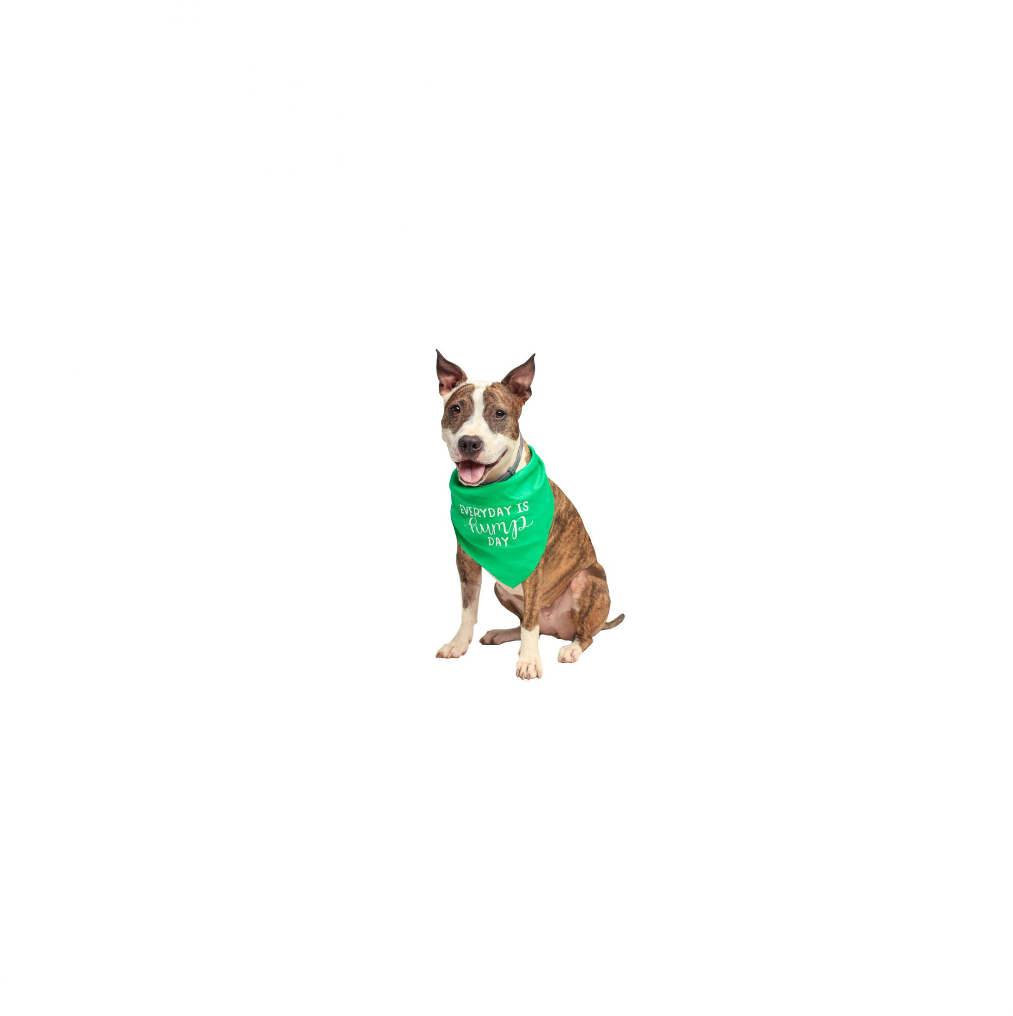 e40e6fd5e20d Fun Gifts for Dogs, Cats, and More Pets