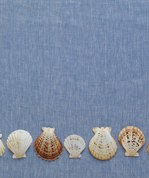 Seashells on blue fabric