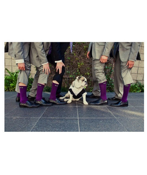 Groom and groomsmen with purple socks and a dog