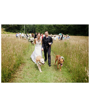 Bride and groom being led by their two dogs