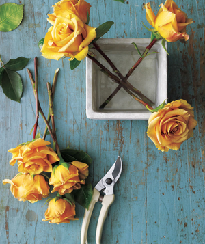 How To: Arrange Roses