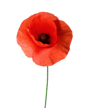 6 pretty flowers and their symbolic meanings real simple poppy mightylinksfo
