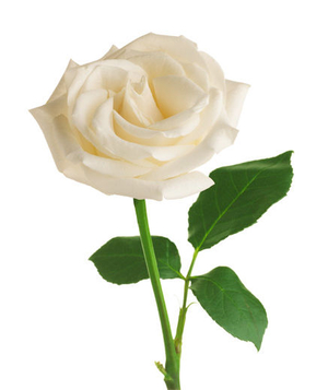 6 pretty flowers and their symbolic meanings real simple white rose mightylinksfo