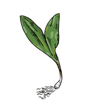 Illustration of ramps