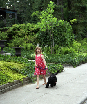Young girl walking a black dog down the sidewalk