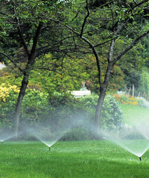 Sprinklers on a green lawn surrounded by bushes and trees