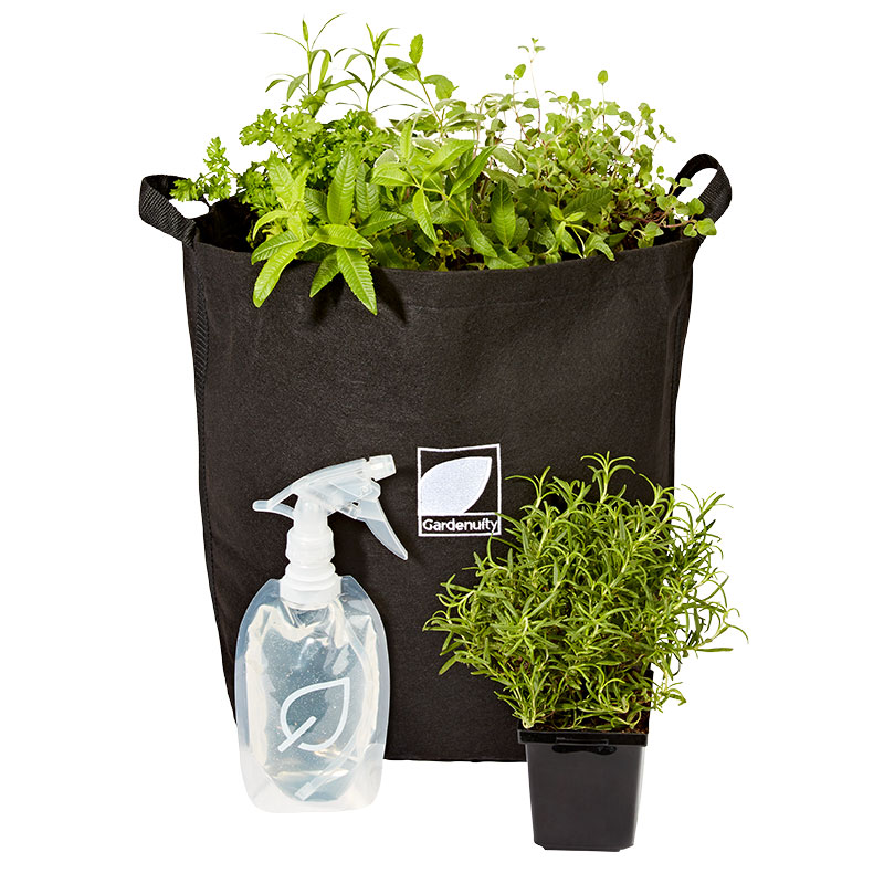 Foodie Gifts: Giftable Garden with Plants