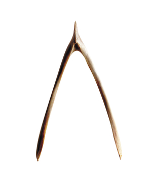Breaking the Turkey Wishbone: A Thanksgiving Tradition - Real Simple