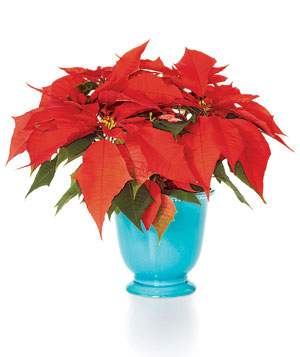 christmas-flower-arrangements